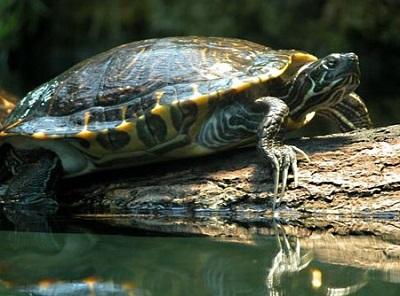 Isole per tartarughe