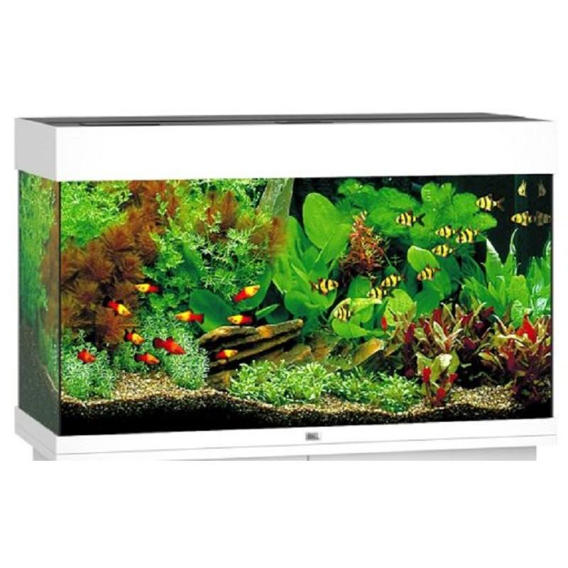 Juwel acquario completo rio 125 litri bianco for Acquario tartarughe completo