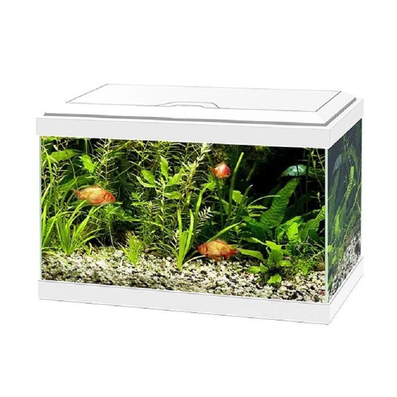 Acquario askoll aqua 20 completo di led e filtro for Acquario completo prezzi