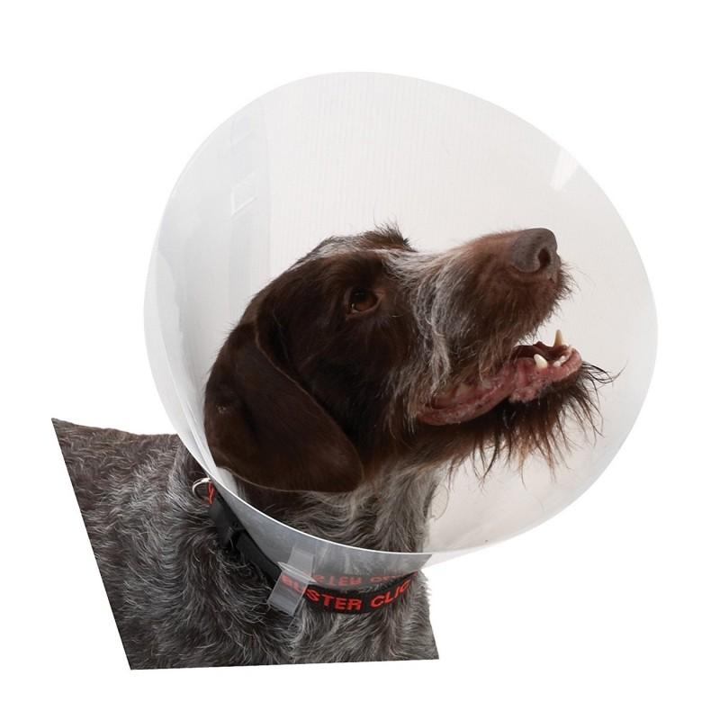 Collari per cani: come abituare Fido ad indossarli