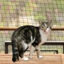 Trixie Rete di sicurezza per gatti nero