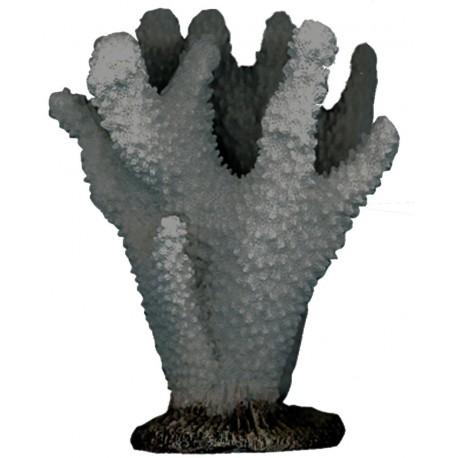Croci decoro Corallo per acquario