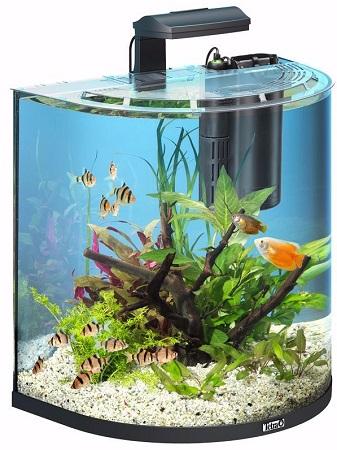 acquario con filtro interno