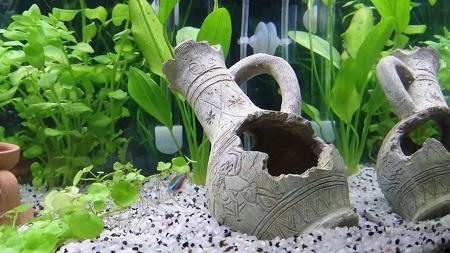 decori per acquario