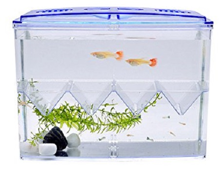Accessori Per Acquario Animal House Italia